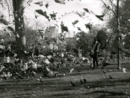 autumn, birds, black and white, cant, fabolous