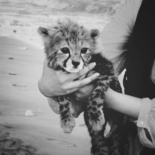 baby, black and white, cute, photography, tiger