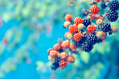 beans, berries, blue, colorful, plant, pretty, raspberries, raspberry, red, saturated