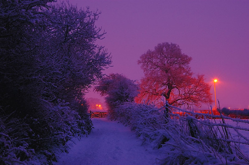 beautiful, lights, purple, snow, trees