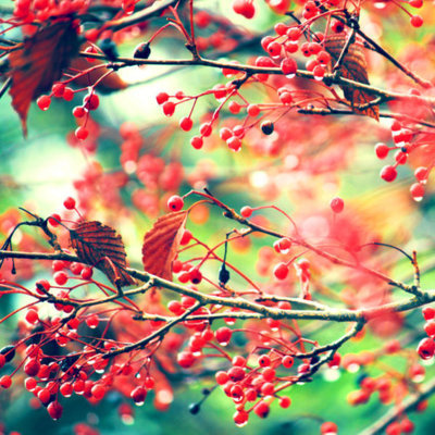 Berries bright colorful leaves pretty image 440831 for Bright pretty colors