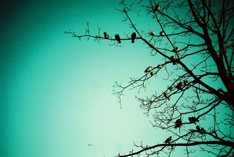 birds, blue, nature and photography