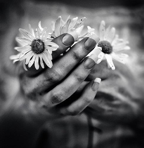 black and white, fingers, flower, hands, photography