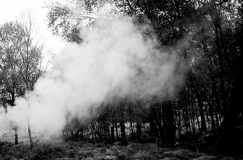 black and white, forest, nature, smoke, trees
