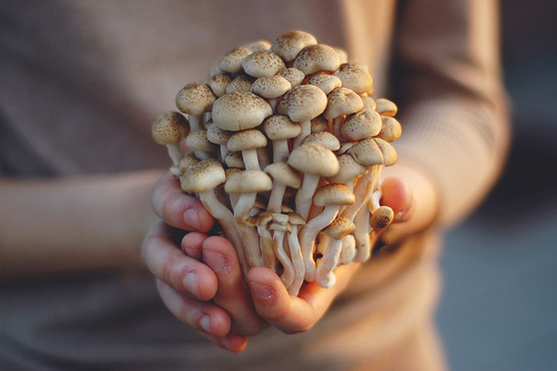 brown, food, hand, hands, mushroom, mushrooms, ophidiophobic