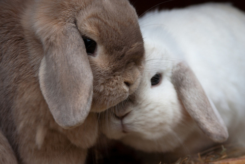 bunny love