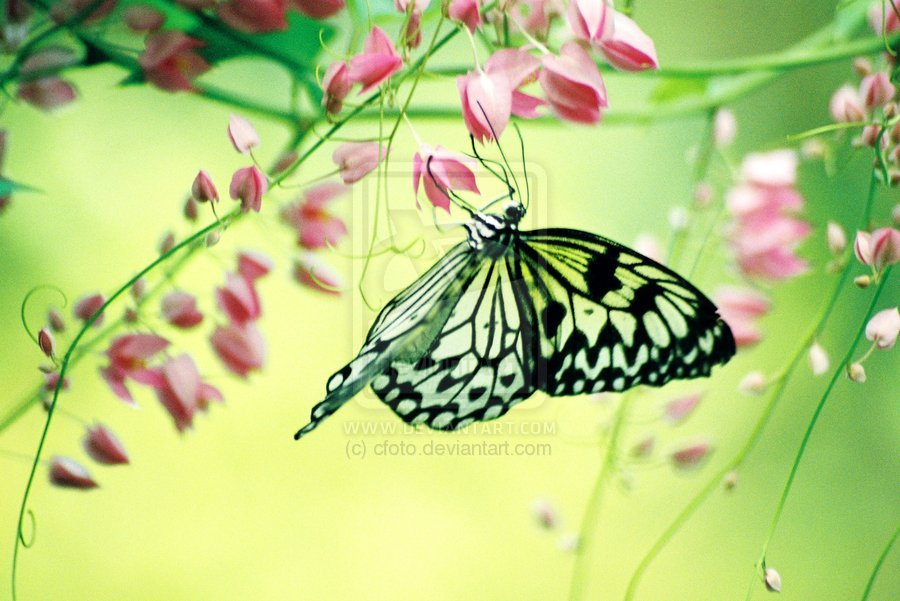 butterfly, nature, photography