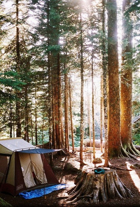 camping, earth, forest, getaway, holiday