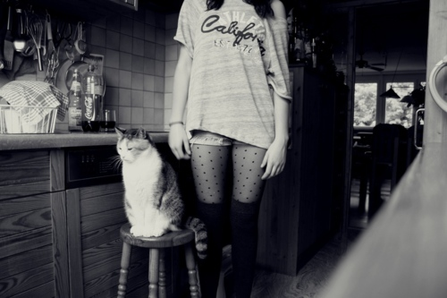 cat, cute, fashion, girl, kitchen