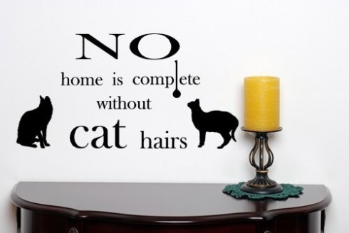 cats, fun, home, text, wall