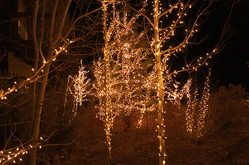 christmas, christmas lights, city lights, forest, house, light, lighted, lights, nature, night, night lights, pretty, sky, tree lights, trees, woods