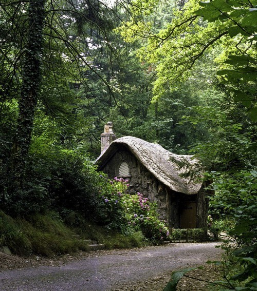 cottage, forest, green, home, house