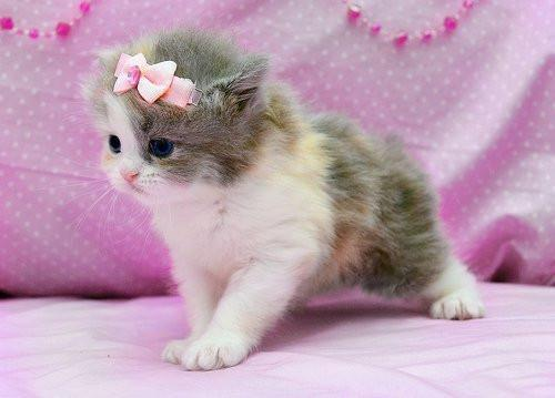 cute, kitty, pink, stylish