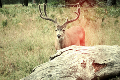 deer, hipster, indie, nature, yosemite