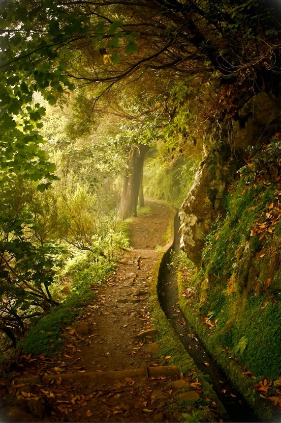 forest, green, nature, path, woods