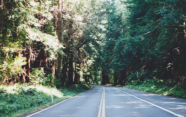 forest, nature, road, trip