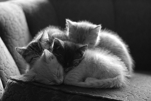 *-*, adorable, black white, boy, brown, cat, couch, cuddle, cute, dreams, ears, friends, girl, heart, kitty, love, mustache, nose, sleep, sweet, white