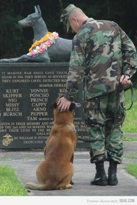 9gag, air force, amazing, army, awesome, beautiful, dedication, dog, dogs, hero, honour, love, marine, memory, military, statue, war, war dogs