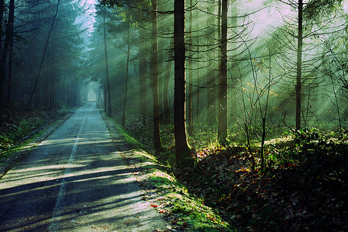 abandoned, beautiful, dark, forest, grass, green, lonely, nature, perfect, photo, photography, road, sun rays, tree, trees, way, woods