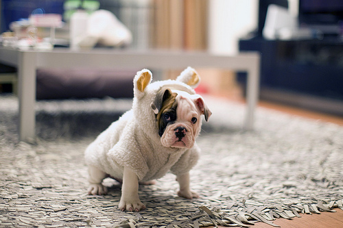 adorable, amazing, animal, beautiful, cute, dog, fashion, image, perfect, photo, photography, style
