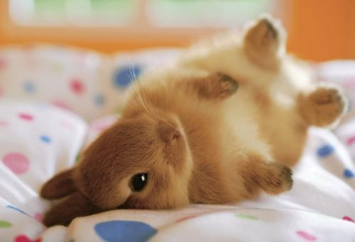 adorable, animals, babies, baby animals, bunnies, bunny, cute, rabbit, rabbits