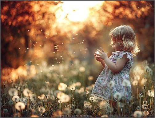 adorable, aww, baby, beauty, blond, blue, cute, dandelions, dress, field, fluffy, girl, grass, green, kid, kiddy, little, orange, photo, playing, small, sun, tiny, trees, white