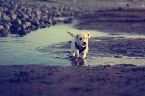 adorable, beach, puppy