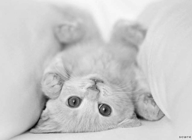 adorable, black and white, cat, cute