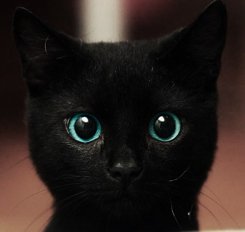 adorable, black, cat, cute, eyes