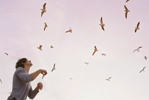 alex turner, birds, boy, dream, love, sky
