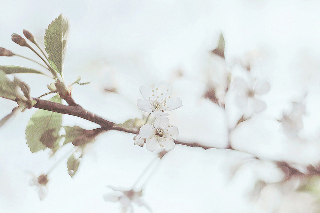 all rights reserved, art, beautiful, blossom, branch