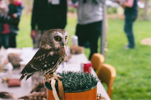 alone, animal, awesome, beautiful, bird, coca cola, colorful, cool, cute, day, dream, eyes, gray, green, lovely, nature, owl, people, photo, photography, place, red, separated with a comma, separated with comma, table
