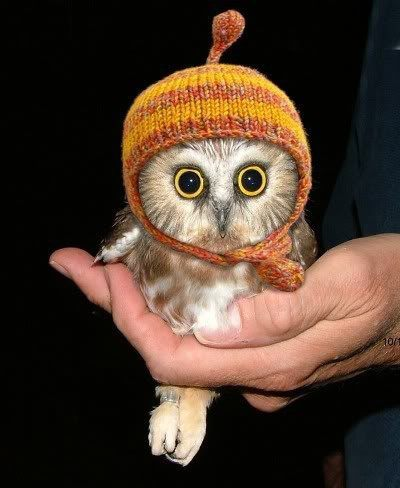 amazing, animal, aww, baby, baby owl