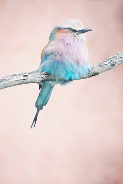 amazing, animal, beautiful, bird, blue, color, colorful, colors, cute, indie, lovely, nature, photography, vintage