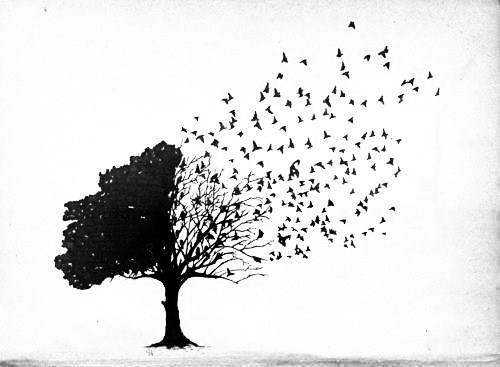 amazing, beautiful, bird, black, black and white, cute, draw, lovely, tree