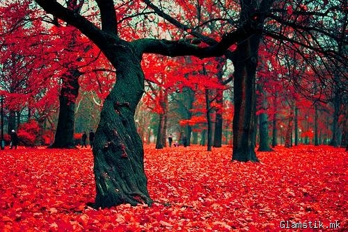 amazing, red, trees