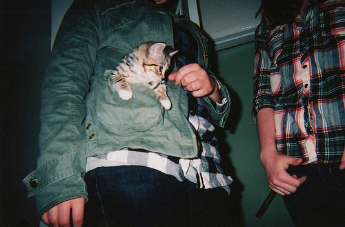analog, boy, boys, cat, cute