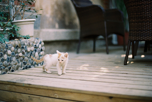 analogic, animal, cat, cute, photography