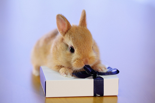 animal, animals, box, bunny, cute