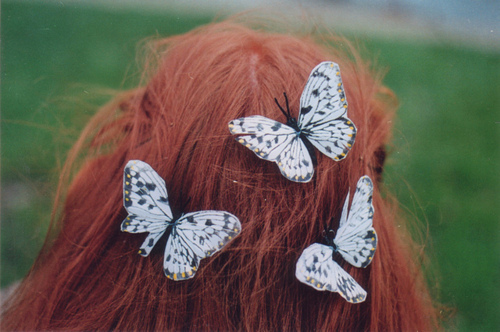 animal, animals, butterflies, butterfly, ginger