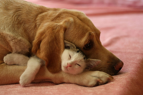 animal, animals, cat, cats, cute, dog, dogs, hug, lovely