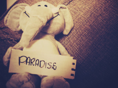 animal, animals, coldplay, cute, cuteeee, elephants, love, paradise