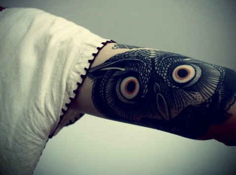animal, arm, ink, inked, owl