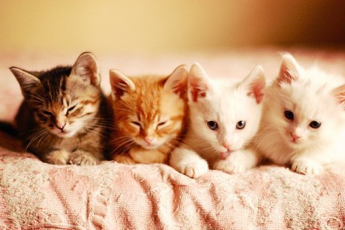 animal, asleep, cat, cats, cute, dreams, fluffy, kitty, sleep