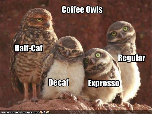 animal, awake, coffee, coffee owls, decafe, expresso, funny, owls, regular, sleep