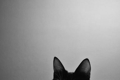 animal, aww, black and white, cat, cute, photography