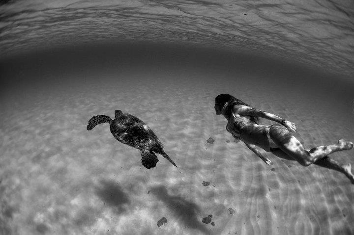 animal, beach, black and white, diving, summer
