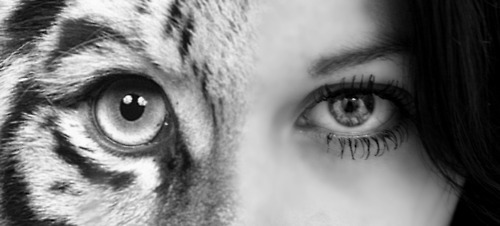 animal, beautiful, black and white, cool, eye, human, life, love, photography, tiger