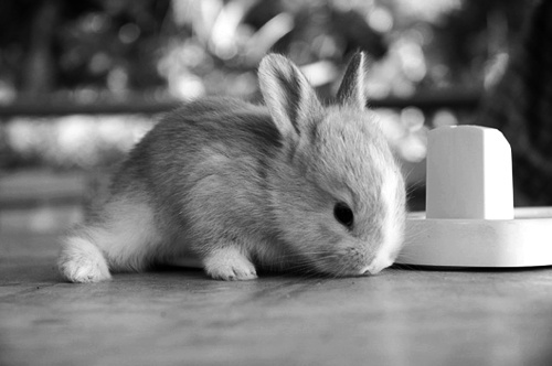 animal, black and white, cute, fofo, photography, rabbit