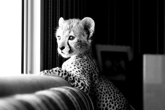 animal, black and white, cute, kind, kindly